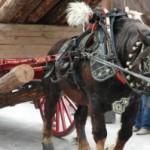 Dijous comencen els actes a Vila-seca per la Festa Major de Sant Antoni