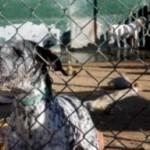 Denuncien que una protectora de Vilallonga del Camp incinera gossos per estalviar-se el seu manteniment