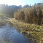 L'ACA millora un tram de més d'1 quilòmetre de la llera del Gaià i afavoreix el normal desenvolupament de la vegetació de ribera autòctona