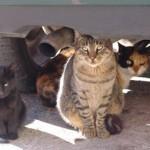 Tarragona controlarà les colònies de gats