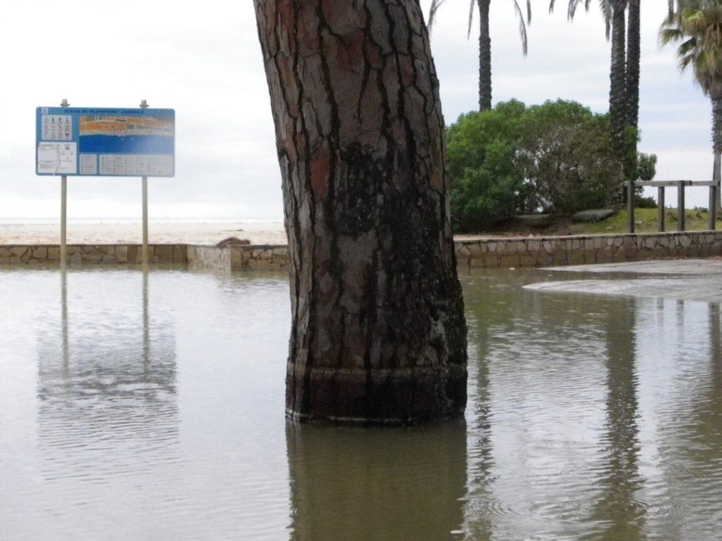 La línia de l'arbre marca el nivell mínim on ha arribat l'aigua en aquest carrer de Vilafortuny. Foto: Romà Rofes / Tarragona21.cat