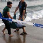 Mor un dofí a la platja del Miracle