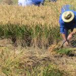 Vilallonga viurà la primera Fira d'artesans i gastronòmica del pagès