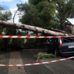 El temporal tomba desenes d'arbres en una urbanització dels Pallaresos
