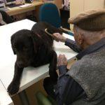 Els gossos, eina de recuperació cognitiva als centres de L'Onada Serveis