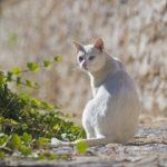 Entitats animalistes denuncien que l'Ajuntament vol eliminar les colònies de gats