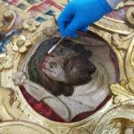 Riudoms descobreix una obra barroca desapareguda de Bonifàs
