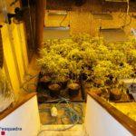 Els Mossos desarticulen una organització criminal de marihuana al Camp de Tarragona