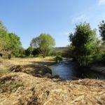 El Morell i l'Associació Aurora impulsen un projecte de recuperació del bosc de ribera