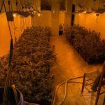 La Guàrdia Civil desmantella una plantació de marihuana a Torredembarra