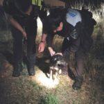 La Policia Local de Torredembarra salva una gosseta que havia caigut a una bassa