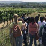 Estudiants de la URV es formen en viticultura ecològica a Alemanya