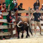 AnimaNaturalis demana a l'Ajuntament d'El Morell que paralitzi els correbous de les Festes Majors