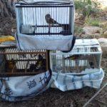 Els Mossos d'Esquadra investiguen un home per caçar ocells amb una xarxa prohibida a Riudoms