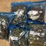 Els Mossos d'Esquadra detenen dos homes quan fugien d'una plantació de marihuana