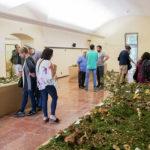 Més de 2.500 persones gaudeixen de l'Exposició de Bolets Vila del Morell