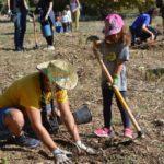 La riuada s'emporta els 800 arbres de la plantada popular del Morell i el 40% dels plantats a Tarragona