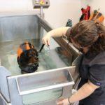 Una cinta de córrer dins l'aigua: l'últim reclam en la rehabilitació de mascotes