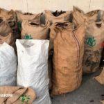 El descens de la producció de garrofes limita el nombre de robatoris al Camp de Tarragona