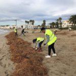 L'Ajuntament d'Altafulla reprèn la renaturalització del cordó dunar de la zona del Fortí