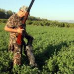 Els caçadors de Tarragona alerten del creixement de la fauna cinegètica pel confinament
