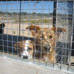 Campanya de donacions a la Protectora d'Animals de Tarragona