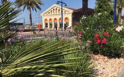La creació de noves zones verdes al Port de Tarragona compensen més de 1.500 tones de CO2