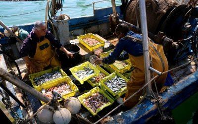 La flota d'arrossegament de Tarragona torna a la mar després de la veda amb l'esperança d'un increment de preu