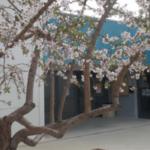 Surt a licitació el contracte de neteja de l'escola i d'edificis municipals de La Pobla de Montornès