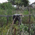 El nou reglament de Cal Dània a Torredembarra ja incorpora l'ús social dels horts ecològics