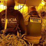 Quatre serbis detinguts i 2.000 plantes de marihuana confiscades en un operatiu a Tarragona, Alcover i Constantí
