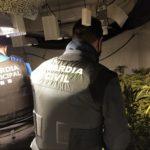 La Guàrdia Civil desmantella una plantació de marihuana del tipus indoor a Riudoms