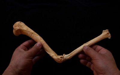 Troben restes d'un dels darrers lleopards de les muntanyes de Prades