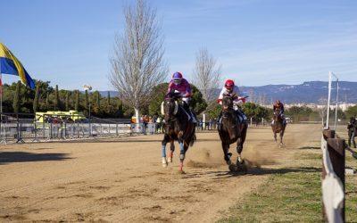 15 cavalls pura sang anglesos han competit aquest matí en unCós de Sant Antoni sense públic