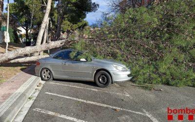 Vents de més de 100 km/h i caiguda d'arbres en diferents punts del territori