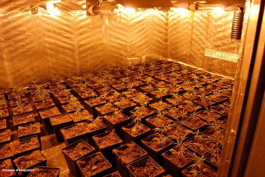 Desarticulen un grup criminal de Salou i El Catllar especialitzat en tràfic de marihuana