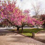 Tarragona crea un mapa d'espais verds de la ciutat que localitza els parcs i jardins urbans i els espais d'interès natural