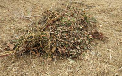 Mont-roig inicia una projecte per transformar les restes de poda i fracció vegetal en estella