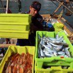 La flota d'arrossegament de Tarragona comença la veda biològica de dos mesos