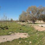 L'Ajuntament del Morell i l'Associació Aurora organitzen la segona edició de la plantada, a l'entorn de la Granja dels Frares