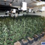 Desmantellen una plantació de marihuana a Reus i detenen el responsable amagat al fals sostre