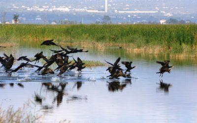 Dia Mundial del Medi Ambient: Objectiu per a la pròxima dècada, preservar els ecosistemes