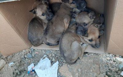 Troben vuit cadells de gos abandonats a Reus