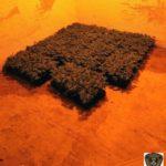 Detenen a Riudoms dos homes i desmantellen una plantació de marihuana