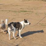 Reus reforça el control contra el propietaris incívics de gossos