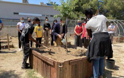 Sant Salvador planta un arbre per Europa