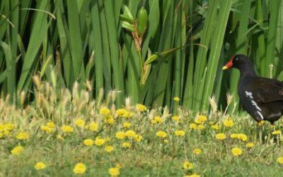 Descobreix els ocells de Reus al Gaudi Golf Club