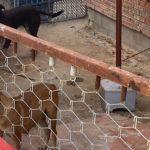Porten a la protectora 3 gossos que havien mossegat veïns de Reus