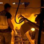 La detenció de 107 persones d'una banda albanesa dedicada al tràfic de marihuana té el seu origen a Reus